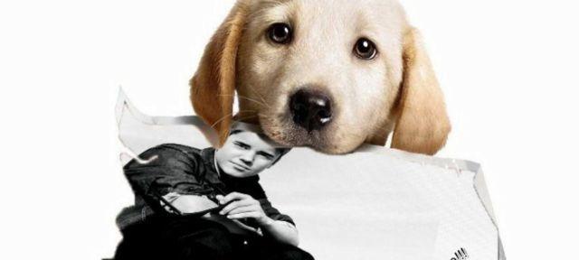El perro de Justin Bieber es furor en Instagram!