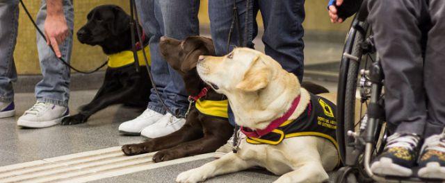 #TodosArriba: ¿Pueden viajar en subte los perros?